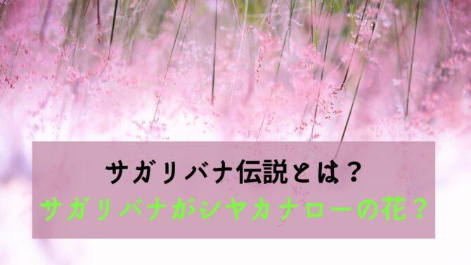 サガリバナ伝説とは?サガリバナがシヤカナローの花?